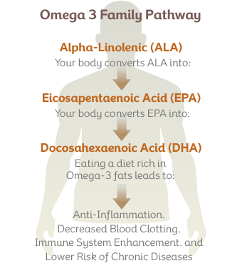 omega3-pathway