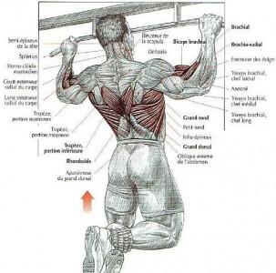 pull-ups-anatomy