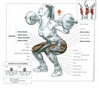squats-anatomy